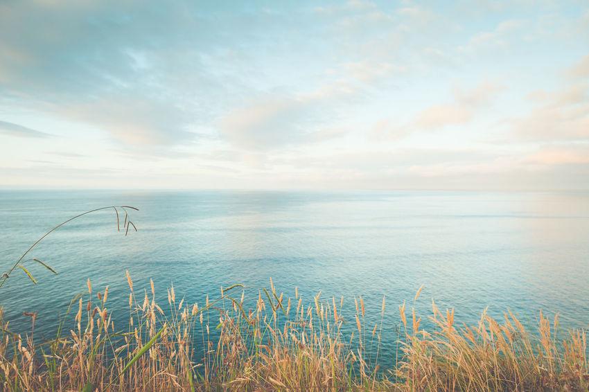 Sea Water Horizon Over Water Beauty In Nature Sky Scenics - Nature Horizon Cloud - Sky Tranquility Tranquil Scene Nature Grass No People Plant Day Non-urban Scene Idyllic Land Beach Marram Grass Timothy Grass