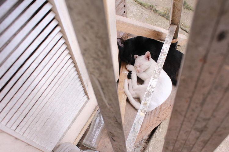 Feline Fur Cats Kitty Pet Domestic Animals Nap Cute Kitty Furry Cuteness Home Black And White Hug Comfort