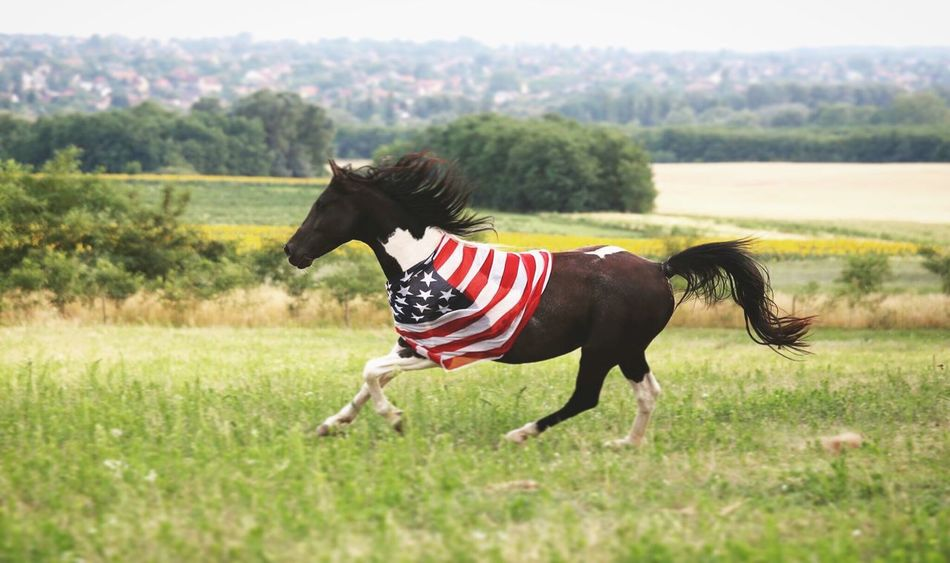 Freedom 🇺🇸 Horse Freedom America Painthorse First Eyeem Photo