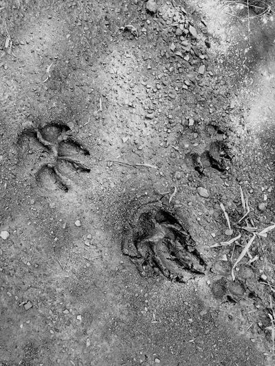 Pawprint Arkansas USA IPhone Photography Iphoneonly IPhoneography Macro Photography 'Merica 'Murica Close-up The Great Outdoors - 2016 EyeEm Awards BLCK&WHT