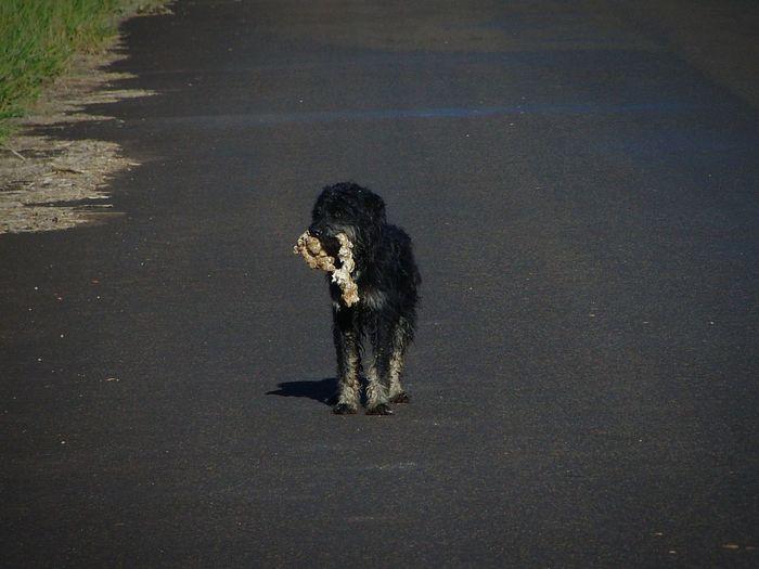 Sobrevivência de um cachorro de rua Dogs Dog Road Street Sun Sand Outdoors Day An Eye For Travel EyeEmNewHere Shades Of Winter