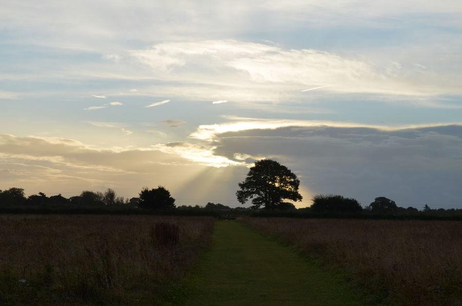 Sunrise Colchester Roman Fields