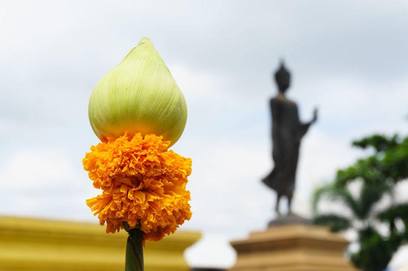 Flower Religion