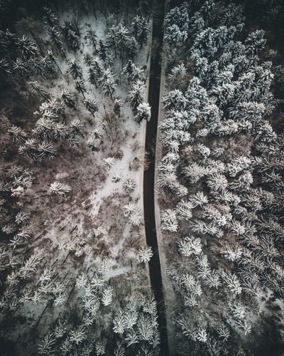 Low angle view of tree in forest during winter