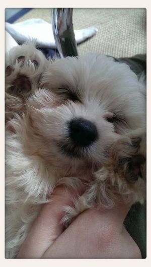 So Cute :) Ilovemydog Cute Pets Dogs