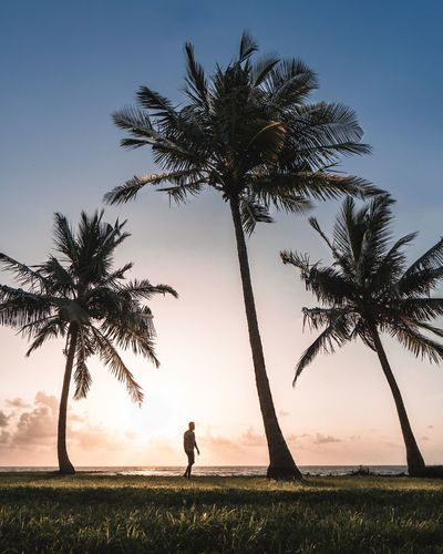 Man standing by palm tree on field against sky during sunset