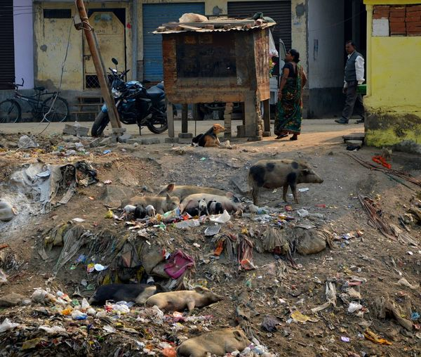 Rubbish Save Animals Garbage Pollution Save The Planet