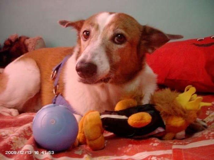 HANDSOME DOG Animal Dog Handsome Dog MARIO Peso Pets Playful Dogd