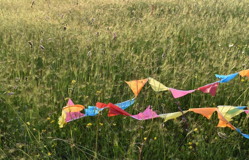 Close-up of multi colored prayer flags over plants