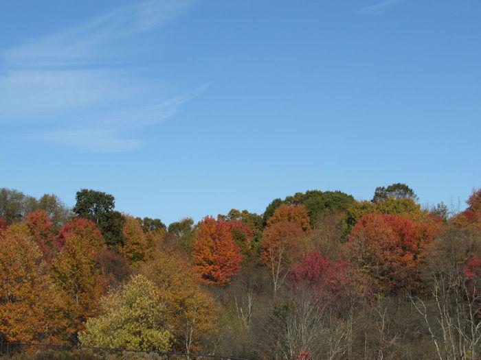Autumn's