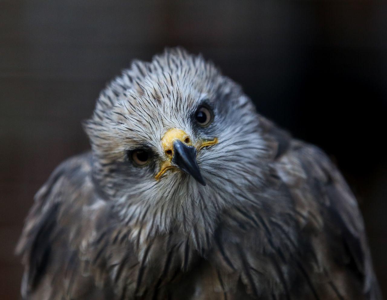 Portrait of bird