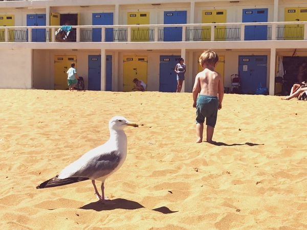 The Great Outdoors - 2017 EyeEm Awards Bird Sand Real People Sunlight Seagull Day Beach Outdoors Nature Lifestyles Broadstairs Paint The Town Yellow