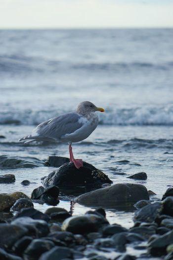 Bird on sea shore