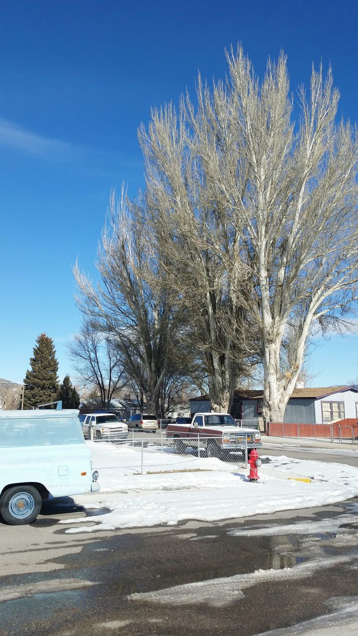 tree, car, land vehicle, snow, winter, transportation, bare tree, day, cold temperature, outdoors, road, street, blue, nature, clear sky, sky, no people