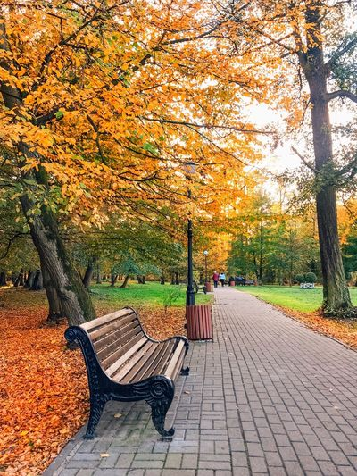 Plant Footpath Autumn Tree Park Nature Park - Man Made Space No People Day Orange Color Sunlight The Way Forward Growth Street Outdoors Beauty In Nature Plant Part Leaf Change Architecture