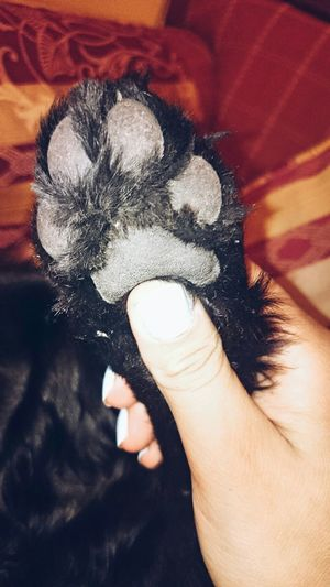 Hi! Love ♥ I Love My Dog Dog Love Dogslife Beautiful ♥ Lovers MiMejorCompañía Mitesoro Leomimascota
