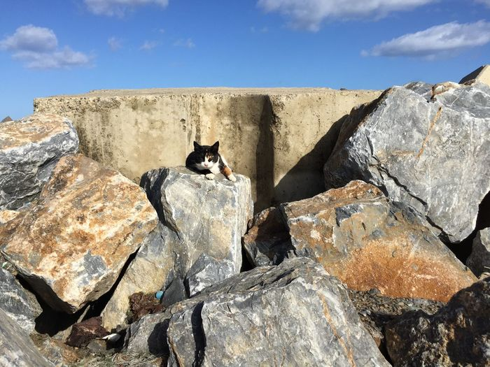 Cat relaxing on rock against blue sky