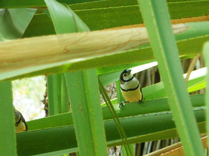Portrait of bird perching on bamboo