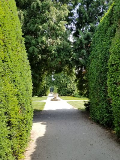 Path through the formal garden of UNESCO World Heritage site of Lednice Castle. Czech It Out Europe Hedge Trees Garden Garden Photography Lush Foliage Green Nature Planter Flower Pot Diminishing Perspective Perspective Ways Of Seeing Tree Shadow Road Sunlight Grass Green Color Plant Pathway Walkway Long Treelined Path Garden Path