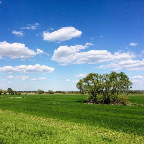Oderbruch Europe Germany Brandenburg GERMANY🇩🇪DEUTSCHERLAND@ Oderbruch Oder Flussauen Grenze Tree Wiesen Riverbank