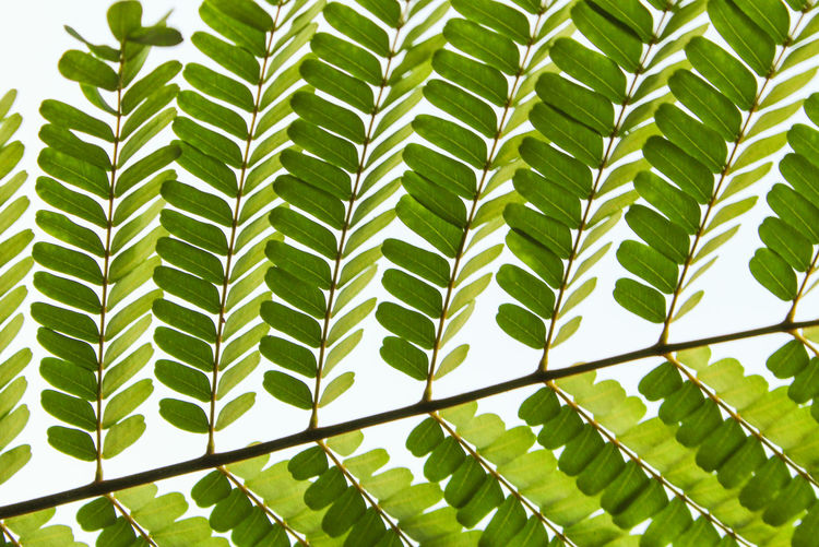 Close-up of leaves growing on tree against sky
