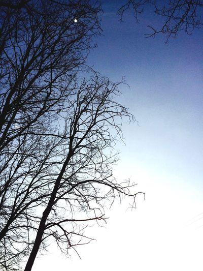 Trees Sky Enjoying Life