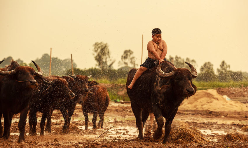 Shirtless boy riding bull on dirt road