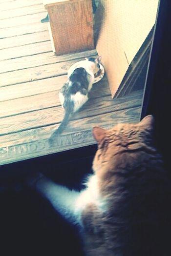 watching the neighbors kitty eat Animalkindness