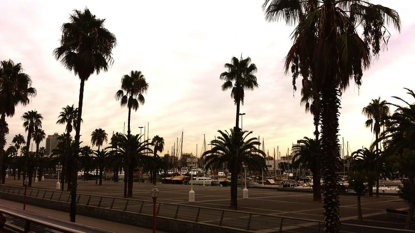 Palmtrees Barcelona Taking Photos Ships Hafen Beautiful Day Enyoing Life Hello World Have A Lot Of Fun  Relaxing View