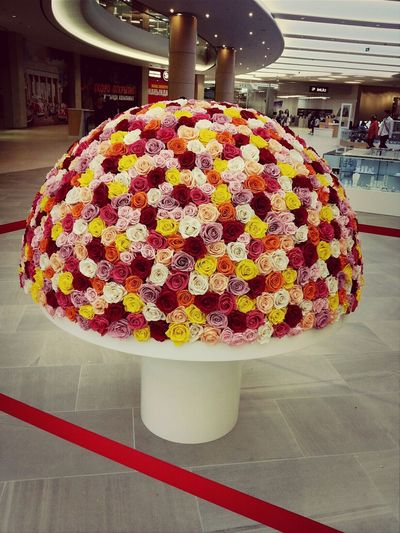 Roses Flowers  Beauty Dostykplaza Perfect