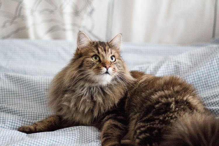 Portrait of kitten sitting on sofa