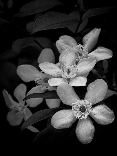Flower B&w Photography B&W Monochrome Photography