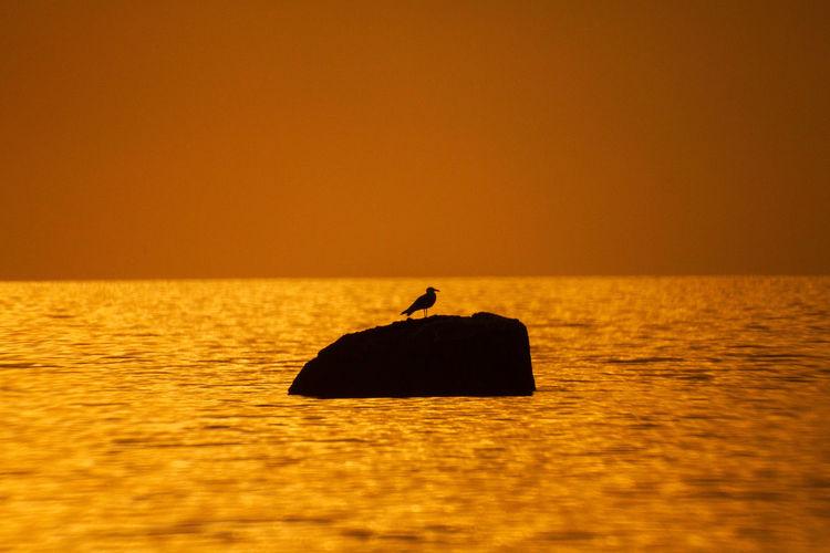 Beautiful landscape with lonely seabird on stone,sunset background , orange light