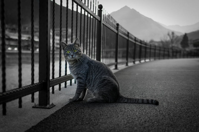 Cat relaxing on road