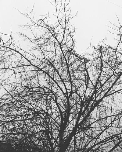 """важными были, остались в разряде """"важны ли"""", чертим круги из законов, ошибок, долгов. люди уходят, ведь люди всегда уходили, город пронизан пулями их шагов. (С) Александра Мисанова поэзия"""