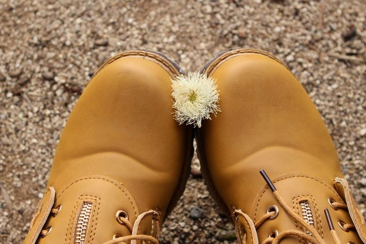 Close-up of flower amidst shoes at beach