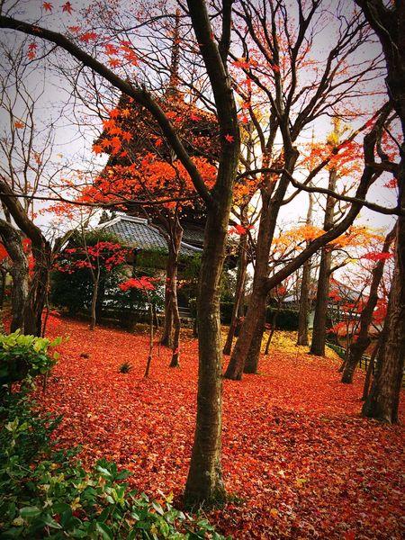 Relaxing 寺社仏閣 京都Japan 紅葉 真如堂