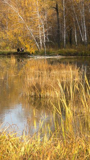 Autumn Landscape Nature Outdoors Yellow Water Reflections Landscape_Collection Siberia Autumn Colors осень