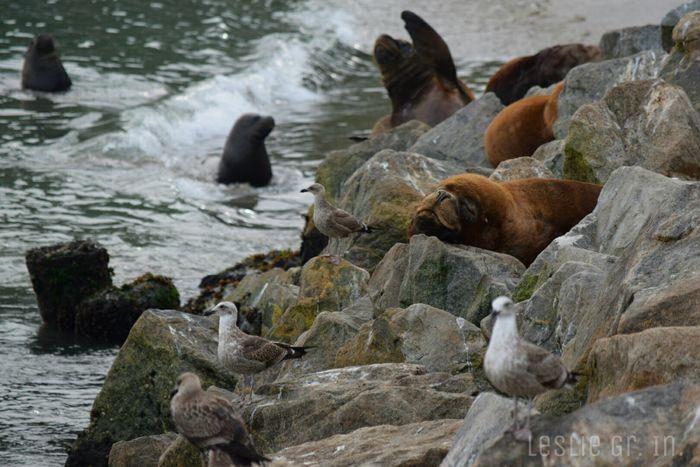 Lobodemar Animals Fauna Mar Playa Beach Sanantonio Lobosmarinos Lobo Gaviota Rocas Leslie_Gr_In