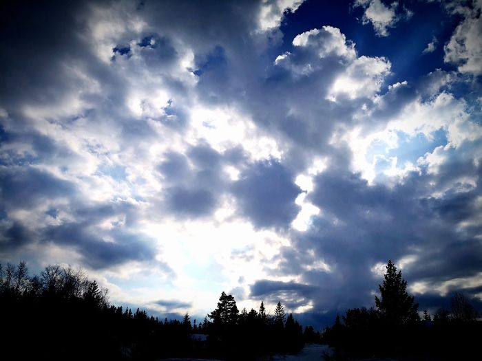 April cotton clouds above Norwegian wood Norway Huawei Nature Norwegian Beauty In Nature Tree Blue Sky Cloud - Sky Treetop Cumulus Cloud Pine Woodland Pine Tree Evergreen Tree Silhouette Dramatic Sky Outline Cloudscape Meteorology Fluffy Coniferous Tree