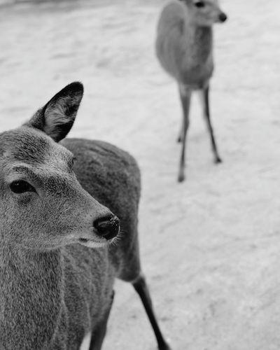 hi deer Bird