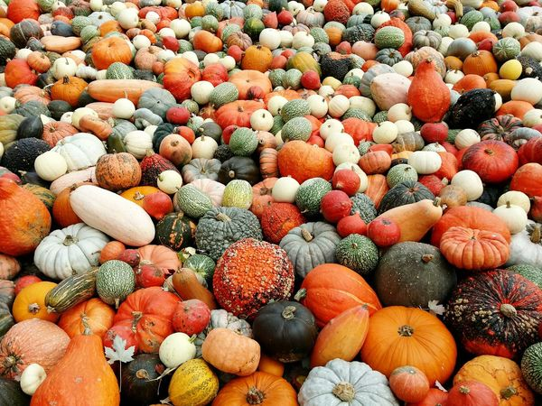 Fall Beauty Colours Taking Photos Fall_collection Pumpkins Nature's Diversities The Great Outdoors - 2016 EyeEm Awards Outdoors EyeEm Gallery EyeEm Nature Lover Perspectives On Nature