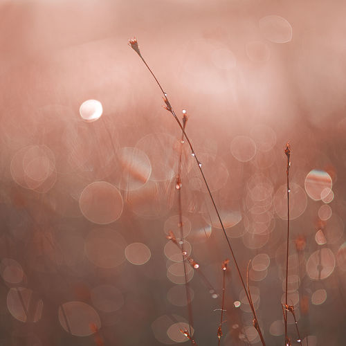 Beautifyl Pink Quadrat Square Beauty In Nature Close-up Day Defocused Dew Drops Droplets Fragility Freshness Growth Illuminated Lens Flare Macro Macro Nature Nature No People Outdoors Pink Color Pink October Plant Sun Water Perspectives On Nature Shades Of Winter
