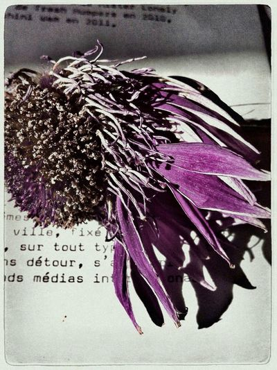 Words And Flower