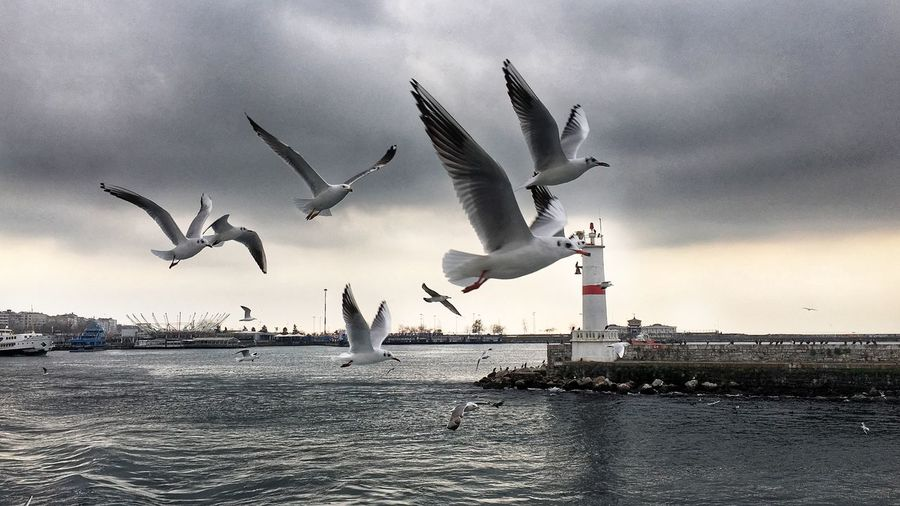 Companions along the way with the ferry in Istanbul. Freedom Wings Bird Black Sea Bosphorus Istanbul - Bosphorus Ferry Istanbul Sea Water Animals In The Wild Animal Themes Sky Seagull Flying Nature Horizon Over Water No People Sea Bird Bird Spread Wings