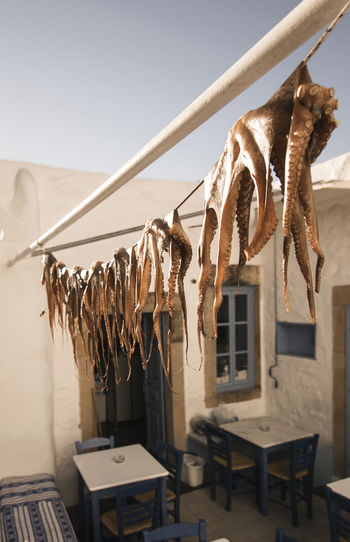 Close-up of octopus hanging on clothesline against clear sky