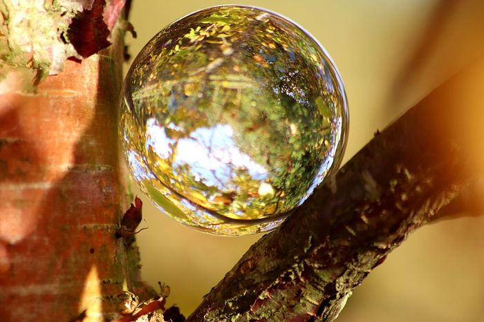 Reflection Close-up Focus On Foreground Nature Bubble Shiny Sphere Plant Glass - Material Vulnerability  Low Angle View Transparent Fragility Outdoors No People Tree Sunlight Day