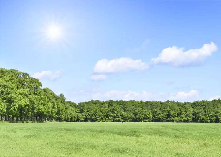 Green meadow and blue sky, summer scene with copy background. Copy Space Field Green Trees Backgrounds Beauty In Nature Blue Sky Clouds Environment Field Forest Grass Green Field Green Meadow Land Landscape Lawn Meadow Nature No People Outdoors Plant Scenics - Nature Sky Tranquil Scene