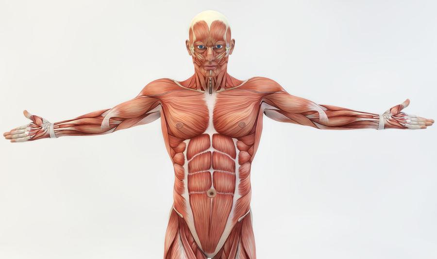 anatomy | EyeEm