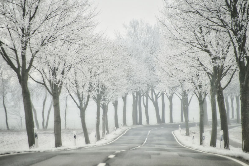 Streetphotography Street Winter Wintertime Ice Snow Frozen Frost Frosty Cold Temperature Cold Tree Plant Road Direction The Way Forward Transportation Diminishing Perspective Treelined Nature No People Bare Tree Branch Day Beauty In Nature Tranquility In A Row Outdoors